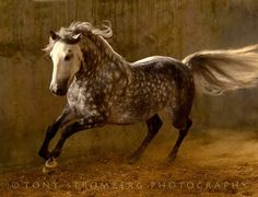 The horses are among the most beautiful creatures to be found on earth, can you deny that?? They all
