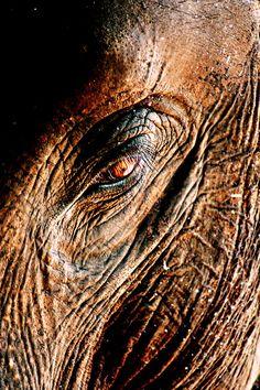 tree bark - elephant photography -