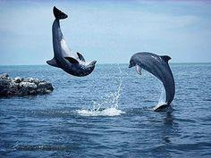 Delfini ... mare aperto