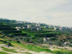 #صور .. فصل الربيع في عصيرة القبلية / نابلس - فلسطين