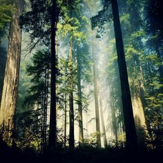 conserve forests=stop climate change Cutting down forests causes up to 20% of global carbon emissions.
