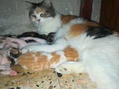 Mother Cat Feeds her baby Born Cat Work, Mother Cat, Cat Drinking, Cat Feeding, Baby Born, Baby Cats, Funny Cats, Dads, Kitty
