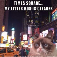 Grumpy cat Times Square my litter box is cleaner