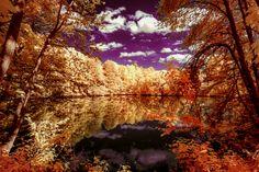 Fall in wonderland (by Thorsten Scheel)