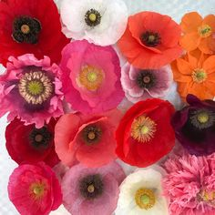 """Kurtknudsen on Instagram: """"Prolific pollen-packed Poppies properly placed plus picked promptly prior to pm #fromkwksgarden #poppies #whatsbloomingtoday…"""" Coral Pink, Poppies, Floral Wreath, Packing, Wreaths, Places, Fabric, Instagram, Decor"""