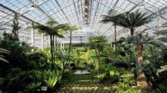 Looking from the entrance of the newly re-opened fern room at the Garfield Park Conservatory.