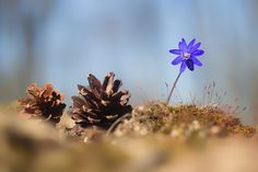 Spring wild flower 36 - SONY DSC