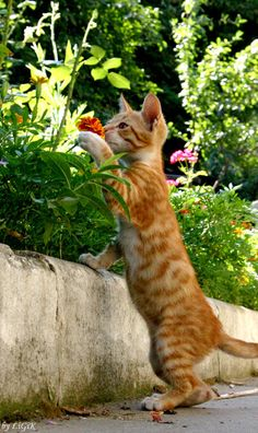 Oliver by LiGiK - One must never forget to stop and smell the flowers... ;)