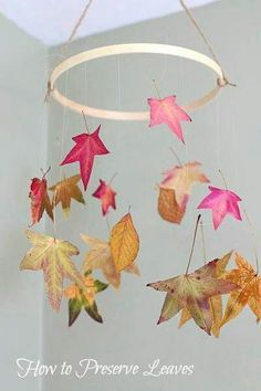 How to preserve leaves! outono: