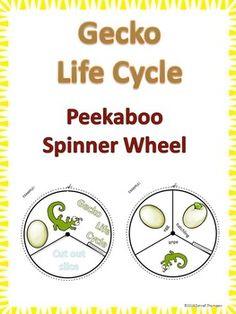 Gecko Life Cycle $