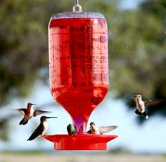 Humming Bird Food Recipe - perfect for our hummingbird feeder! Hummingbird Nectar, Humming Bird Feeders, Humming Birds, Sneak Attack, Lawn And Garden, Bird Feathers, Belle Photo, Beautiful Birds, Outdoor Gardens