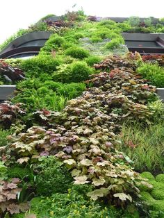 PARIS 7eme. Green wall by Patrick Blanc for Musée du Quai Branly, 10 juin 2012…