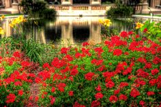 Flowers by the reflecting pool in Balboa Park located in San Diego California. Photo by Paul Koester.