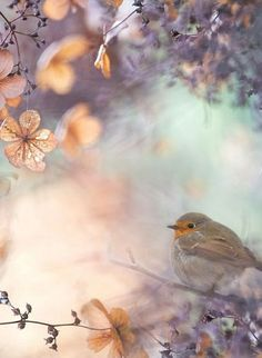 Hydrangea fantasy by Teuni Stevense on 500px Found on 500px.com via pinterest.com