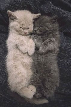 Adorable Sleeping Kittens