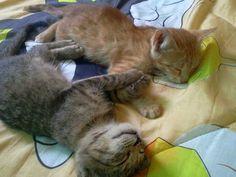 .sweet little kitties.