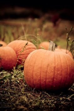 Hot Apple Cider, Autumn Harvest, Seasons Of The Year, Caramel Apples, Country Life, Squash, Pumpkins, October, Vegetables