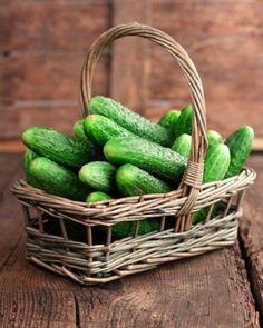 キュウリの贈り物。|Hane Vegetable Life-ベジタブルライフ-