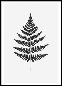 Tavla / affisch med botaniskt motiv. Vacker tavla med löv från ormbunke. Stilrena posters och prints med blad och växter. www.desenio.se
