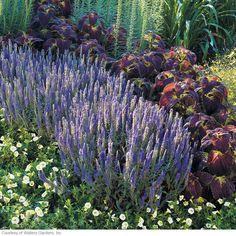 Standout veronica!  Get unbeatable drama and color when you add veronicas to your garden!