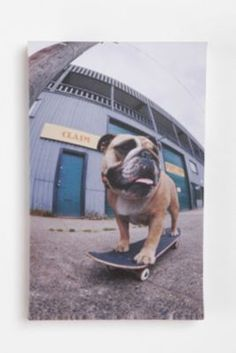 skateboarding pup