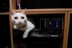 Cat on the gramo...