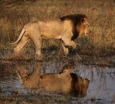 The Okovango Delta, Botswana -- The Last Wilderness Wetland in Africa