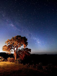 The Milky Way - the tree is located at the top edge of the Ngorongoro Crater in Tanzania...
