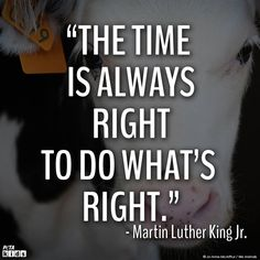 Celebrate Dr. Martin Luther King, Jr. all month long! Read some of Dr. King's quotes to your students and ask your class how they apply to both humans and animals. #MLKDay #LessonPlan #HumaneEducation