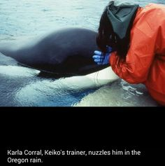 Keiko Orca, Photo Music Video, Free Willy, Wale, Killer Whales, Sea World, Ocean Life, Marine Life, Dolphins