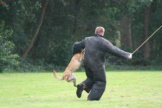 Hier was het moment dat de boef aan het inbreken was toen kwam wolf om hem te pakken.