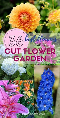 you like to grow a flower garden full of fresh cut flowers? I've compiled a list of the best perennials and annuals for beginners. You'll have lots of ideas of what to plant for all your floral arrangements that you just might run out of vases! Cut Flower Garden, Beautiful Flowers Garden, Flower Farm, Amazing Flowers, Beautiful Gardens, Flower Gardening, Flowers For Cutting Garden, Flower Garden Plans, Flower Garden Design