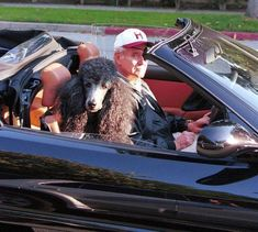 Jack Lemmon chauffeuring his poodle friend in the Ferrari