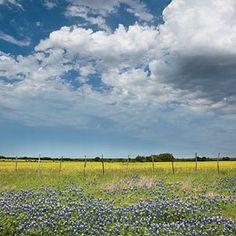 Explore the Heart of Texas