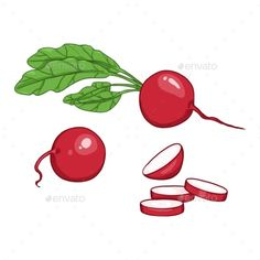 Buy Vector Set of Cartoon Color Radish Illustrations by nikiteev on GraphicRiver. Vector Set of Cartoon Radish Illustrations Z Tattoo, Vector Graphics, Vectors, Symbols, Graphic Design, Illustrations, Cartoon, Color, Icons