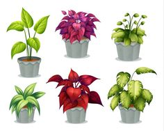 Potted plant Illustrations and Clip Art. Potted plant royalty free illustrations and drawings available to search from thousands of stock vector EPS clipart graphic designers. Plant Images, Plant Pictures, Outdoor Plants, Potted Plants, Flowering Plants, Home Garden Plants, Home And Garden, White Stock Image, Plant Illustration