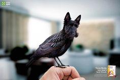 Starlingdog