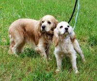 ADOPTED! These two beauties were tied up and left abandoned to a local vet in Plainville. They are both young, around 2 years old. We named them Lucy and Ricky. Please contact Plainville ACO  860-747-1616