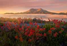 Rise Above. Mt St Helens