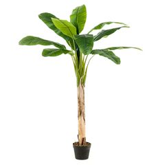 Buy artificial musa banana tree at Blooming Artificial. Featuring large glossy green leaves and a real wooden stem. Musa Banana, Green Leaves, Garden Design, Diys, Bloom, Products, Green, Bricolage, Do It Yourself