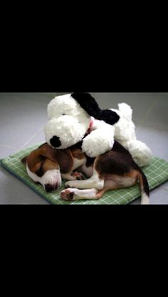 Snoopy Protects!