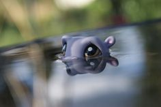 littlest pet shop hippo