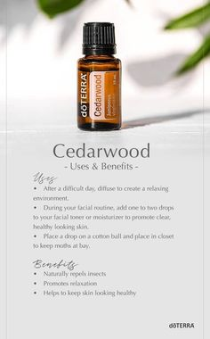 Cedarwood Essential Oil Uses, Cedar Essential Oil, Doterra Essential Oils, Essential Oil Blends, Doterra Cedarwood, Thieves Essential Oil, Aromatherapy Oils, Doterra Oils, Perfume