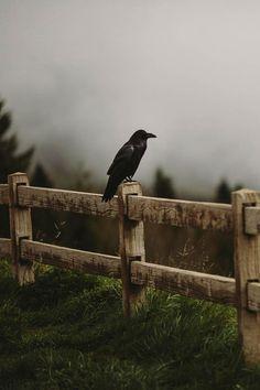 Image de black, bird, and crow
