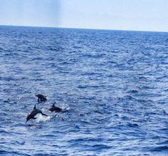 Happily jumping dolphins in Mirissa Sri Lanka