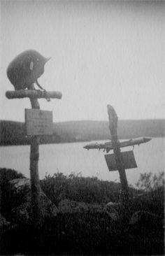 Two graves of German soldiers killed in the Arctic.