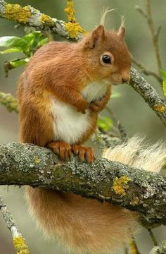 Dogs Love Photography Animals Ideas For 2019 Forest Animals, Woodland Animals, Animals And Pets, Baby Animals, Cute Squirrel, Squirrels, Cute Little Animals, Tier Fotos, Chipmunks