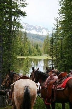 Horse back riding in the mountains is such a cool thing to do. Does this #interest you? - sparkify.com