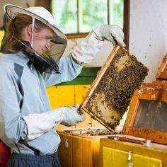 Amazing new health news shows that a simple over-the-counter natural remedy made from the hives of honeybees just might halt prostate cancer in its tracks. It has the medical community buzzing about a new method of cancer prevention.