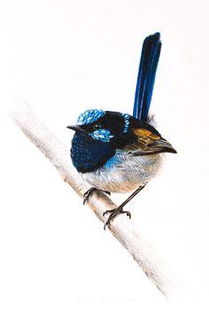 Bird Print Male Superb Fairywren 5 x 7 by RachelHollisArt Rachel Hollis, Watercolor Bird, Watercolour Painting, Australian Birds, Bird Artwork, Bird Silhouette, Bird Pictures, Wildlife Art, Bird Prints